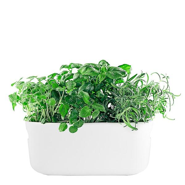 Herb Organiser Örtkruka Självvattnande
