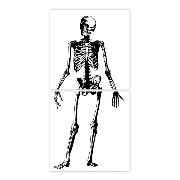 Kakeldekor Skelett 15x15 cm 2-pack Transparent