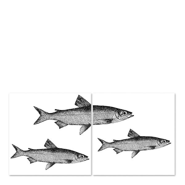 Kakeldekor Fiskar 15x15 cm 2-pack Transparent